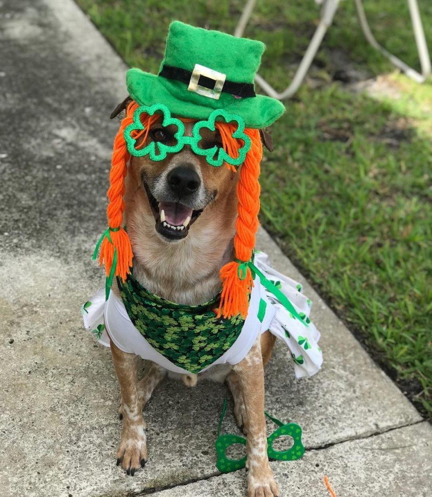 Jaxson has beautiful red hair and is totally ready for St Patrick's Day.