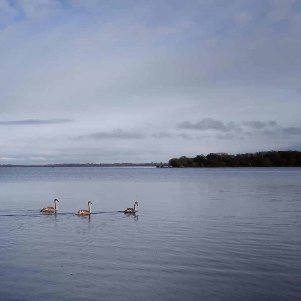 Lough Neagh Discovery Centre is a great spot for birders