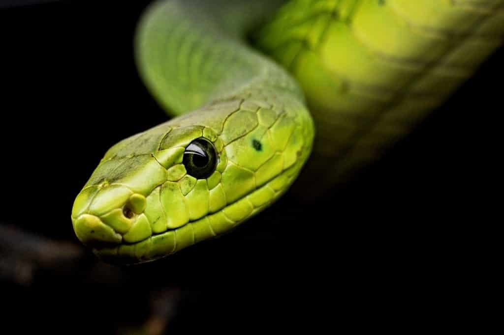 There are no snakes in Ireland because several ice ages made life unsustainable for snake populations.