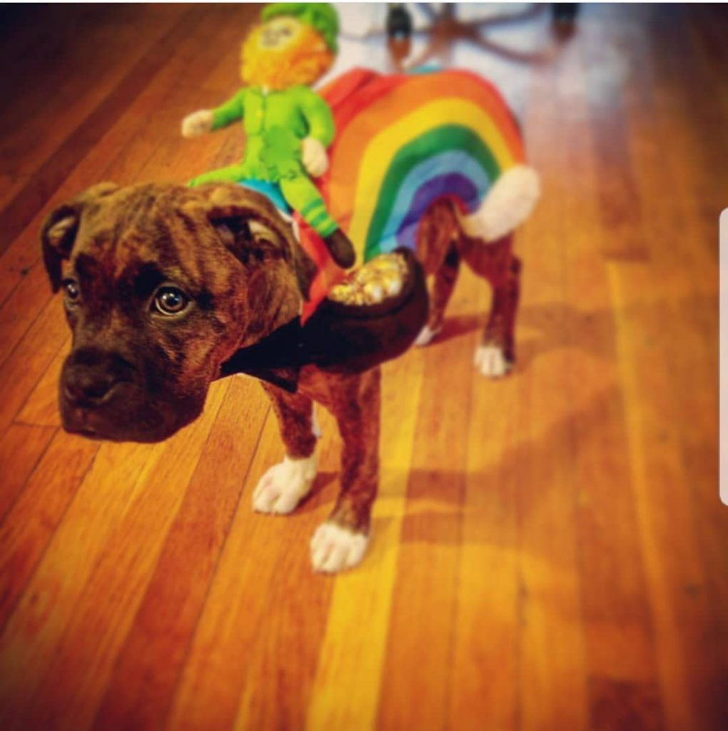 Ty's rainbow outfit is another of the best-dressed dogs we've found on the internet.