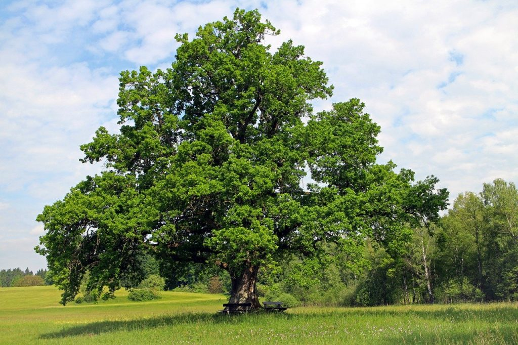 Dara Knot means oak tree in it's translation, it's an interesting symbol for the Celtic symbol for strength.
