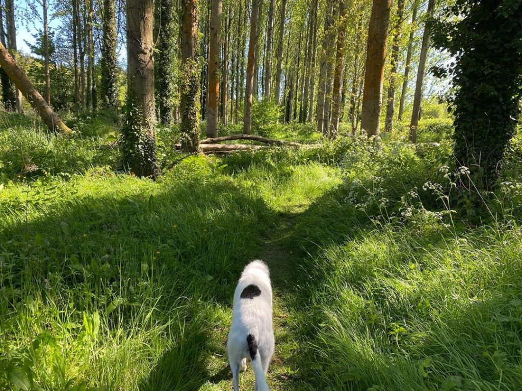 Lagan Meadows is a hidden walk on the outskirts of South Belfast.