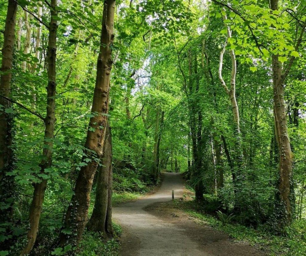 Nature and wildlife – the indigenous Irish woodland