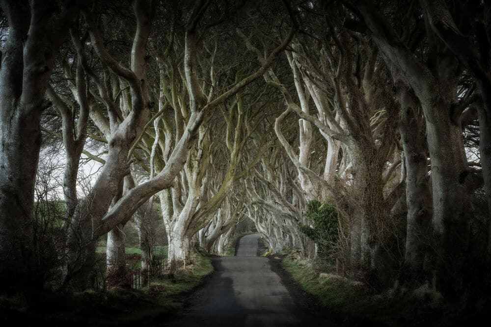 The Dark Hedges are amongst the most famous filming locations in Ireland.