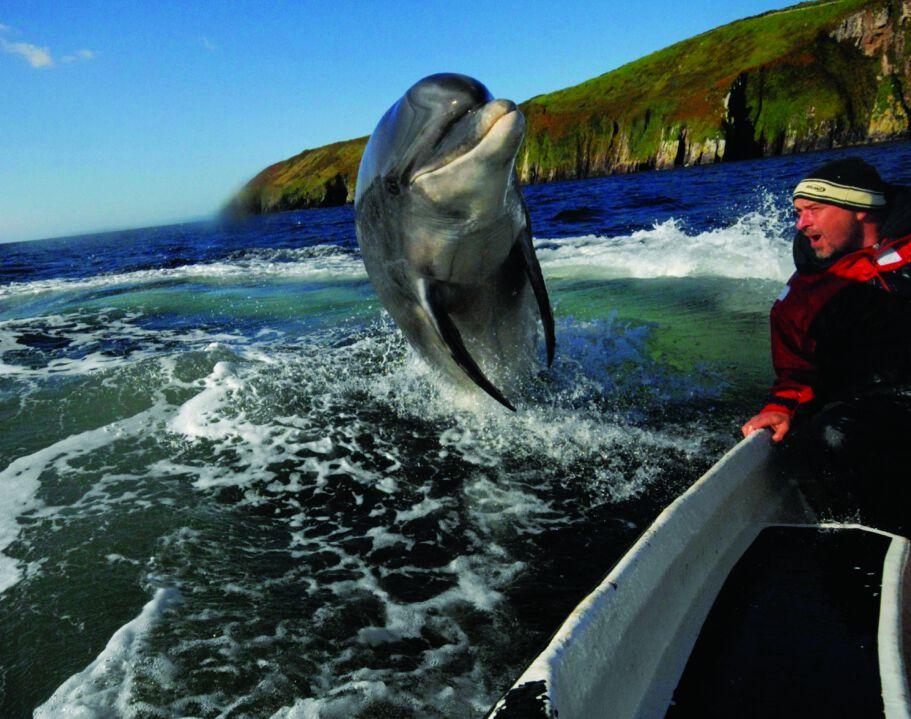 Swim with Fungi – Ireland's favourite dolphin.