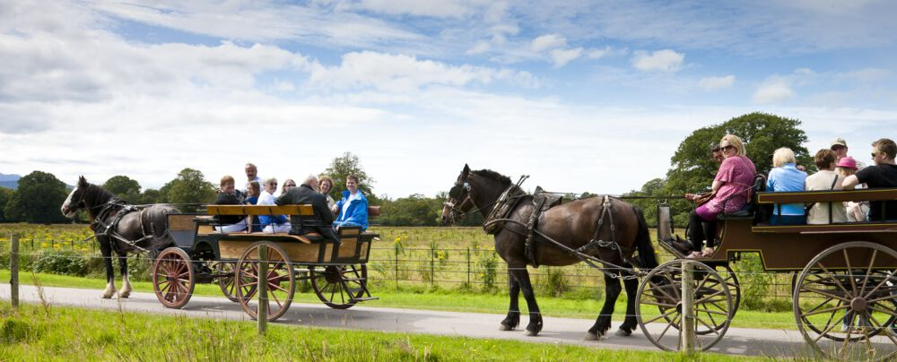 Ride a jaunting car through Killarney National Park – take in the sights.