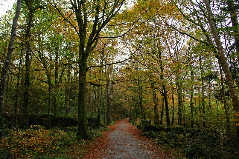 Coole Park, Co. Galway – one of the best historic places in Ireland free to visit