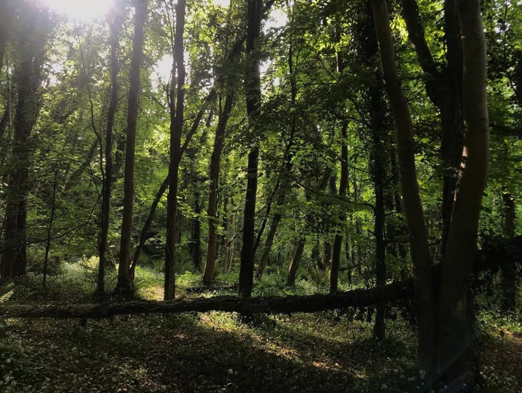 One of the best places that you can get to by Dublin Bus is the Knocksink Woods.
