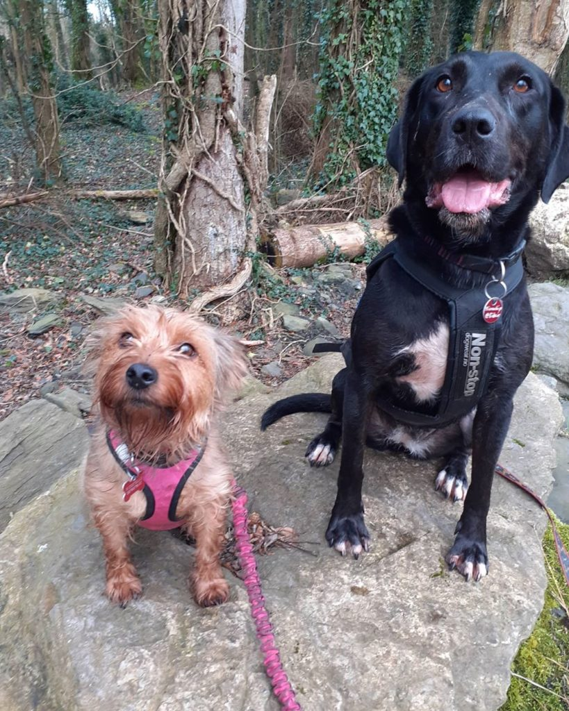 Your dogs are sure to love Centreparcs in Longford.