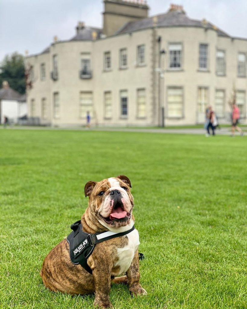 Take your furry friend to visit Marlay Park in Dublin.