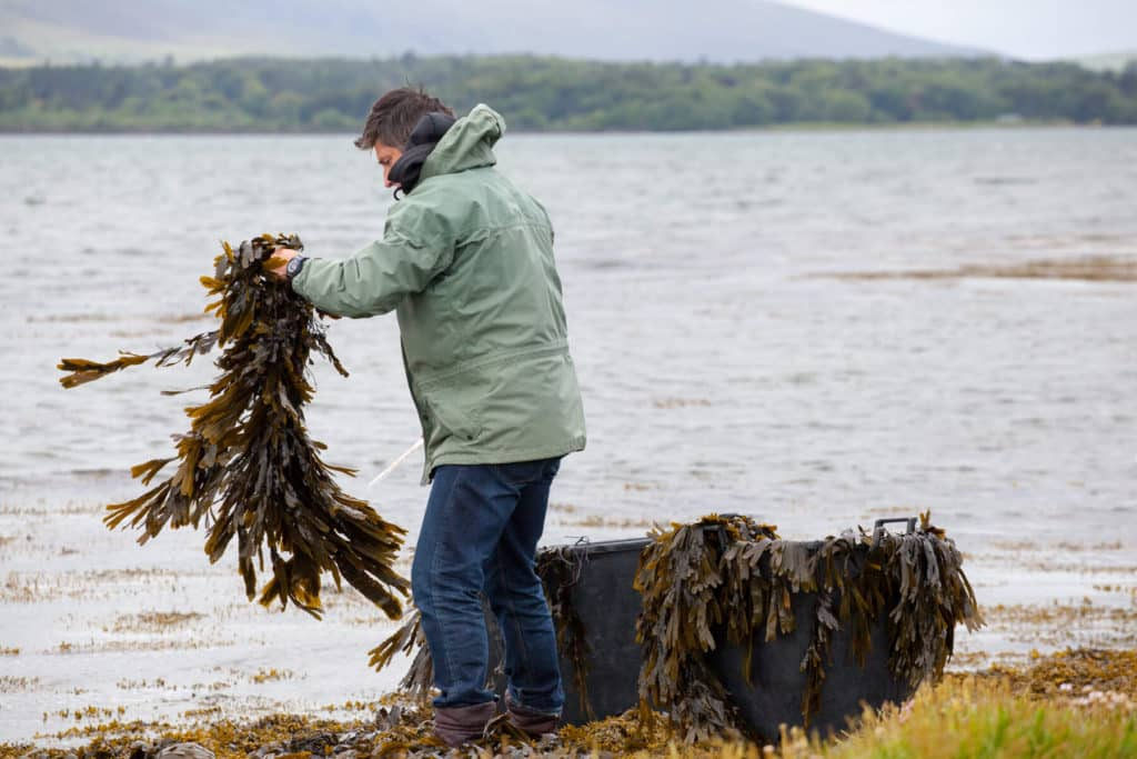 Another of the top unusual things to do in Cork is to harvest and cook your own seaweed.