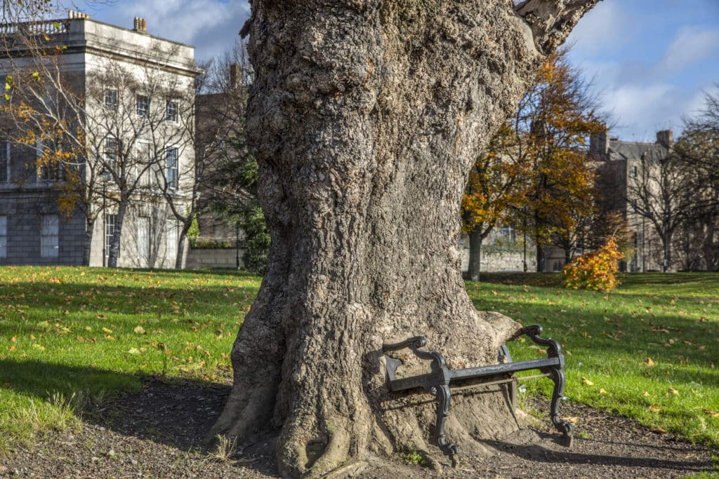 The Hungry Tree in Dublin is so weird.