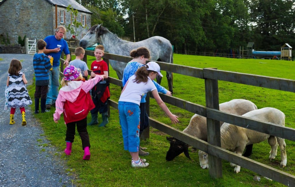 Tullyboy Farm is the perfect spot to cuddle some animals and make furry friends.