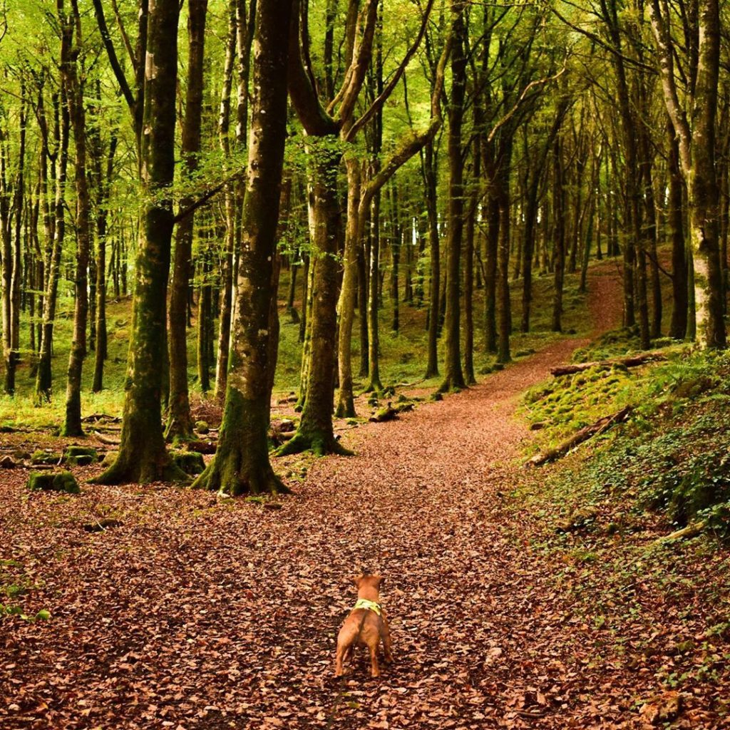 Looking a breath of fresh air, check out Mullaghmeen Forest.