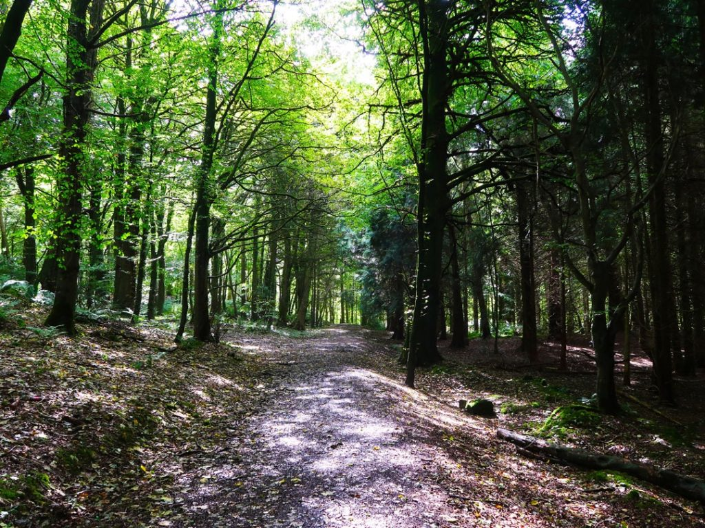 A pleasant walk in Rossmore Forest Park is perfect for a Friday morning.