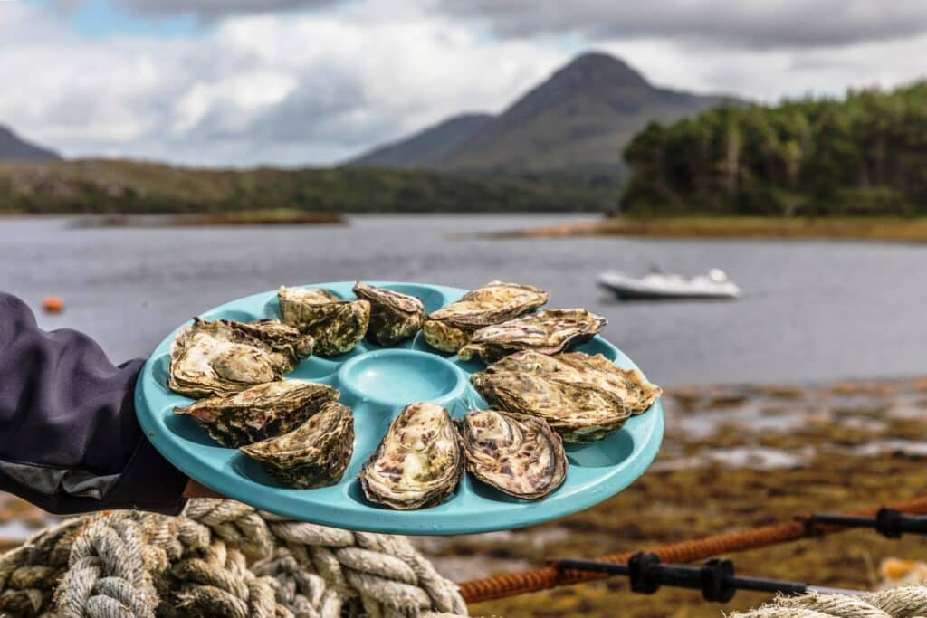 Go on an oyster tasting tour at Ballinakill Bay.