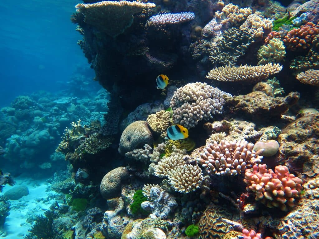 Snorkelling at the Great Barrier Reef is one of the top bucket list ideas.