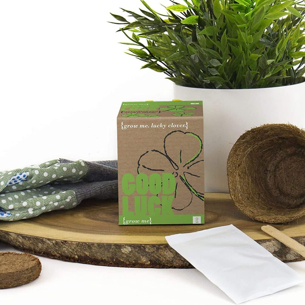 Our list of Irish Christmas gift ideas on Amazon includes this four-leaf clover kit.