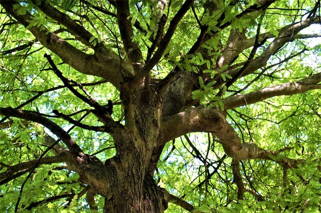 'A Poison Tree' by William Blake is one of the most famous poems all Irish students will remember from school.