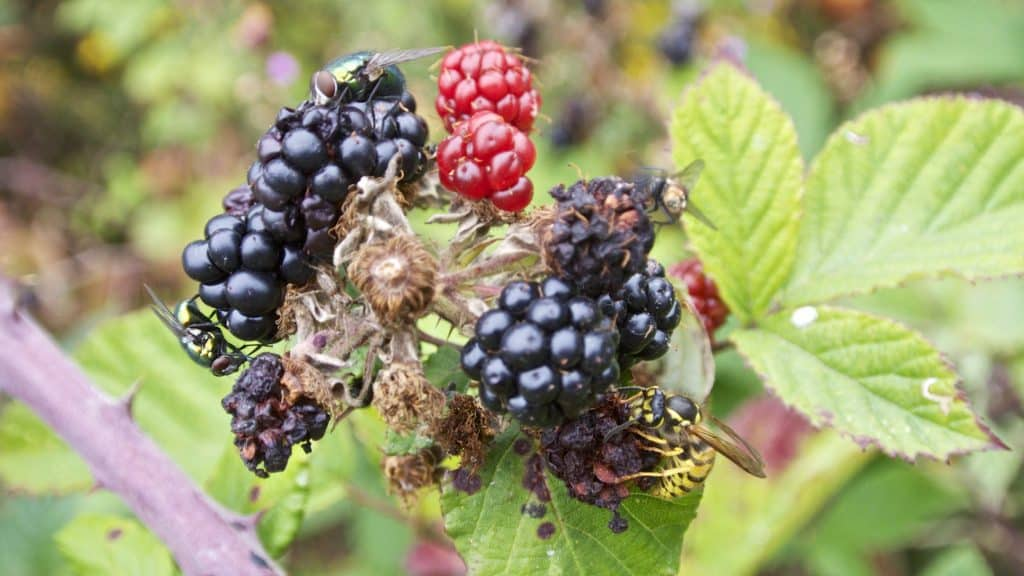 'Blackberry Picking' is one of the poems all Irish students will remember from school.