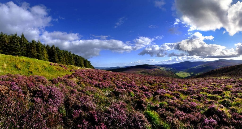 Things to know about visiting Sally Gap.