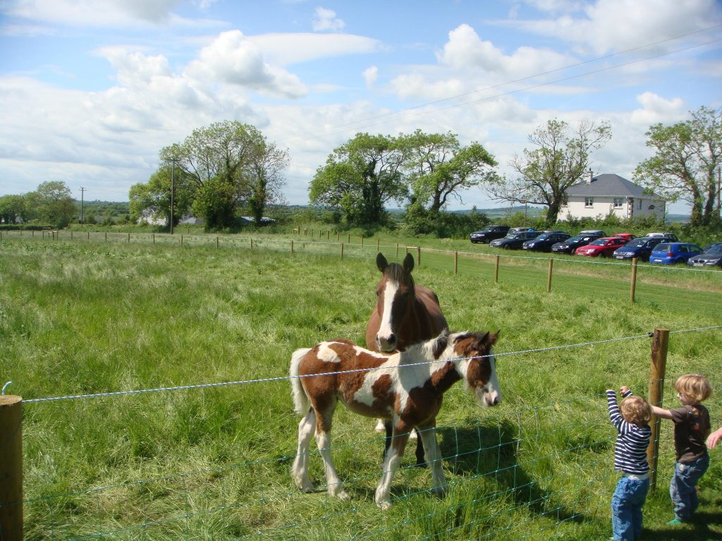 Red Mountain Open Farm is one of the best things to do in Meath.