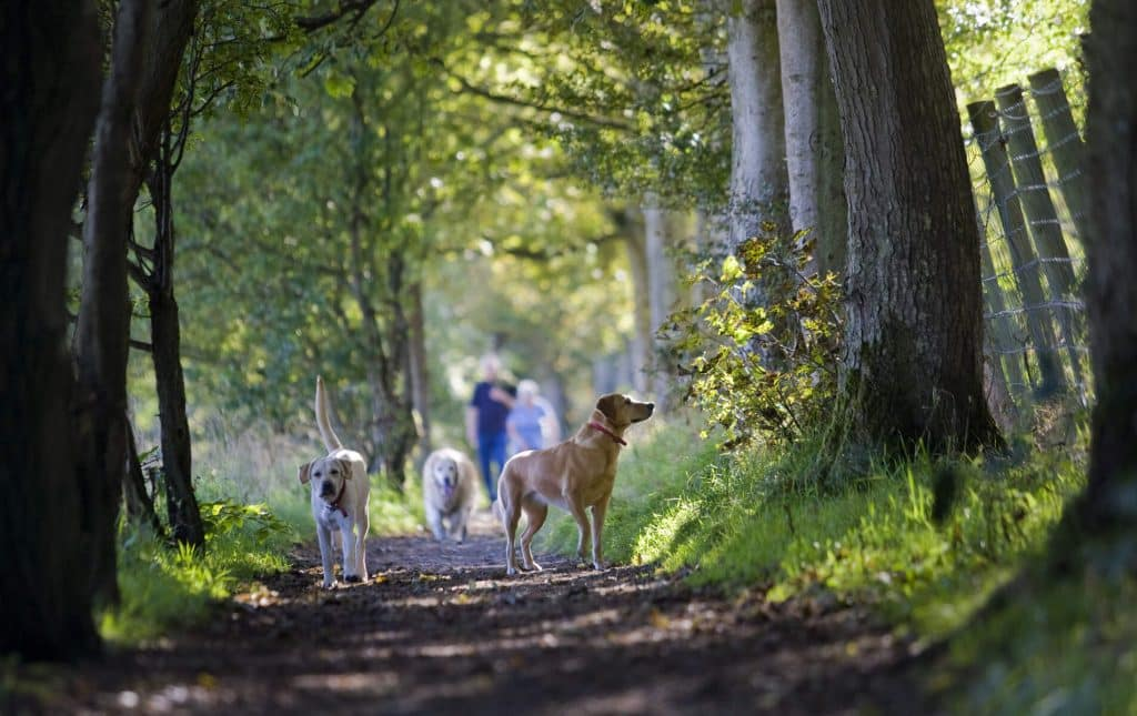 Carnfunnock Country Park is perfect for the whole family.