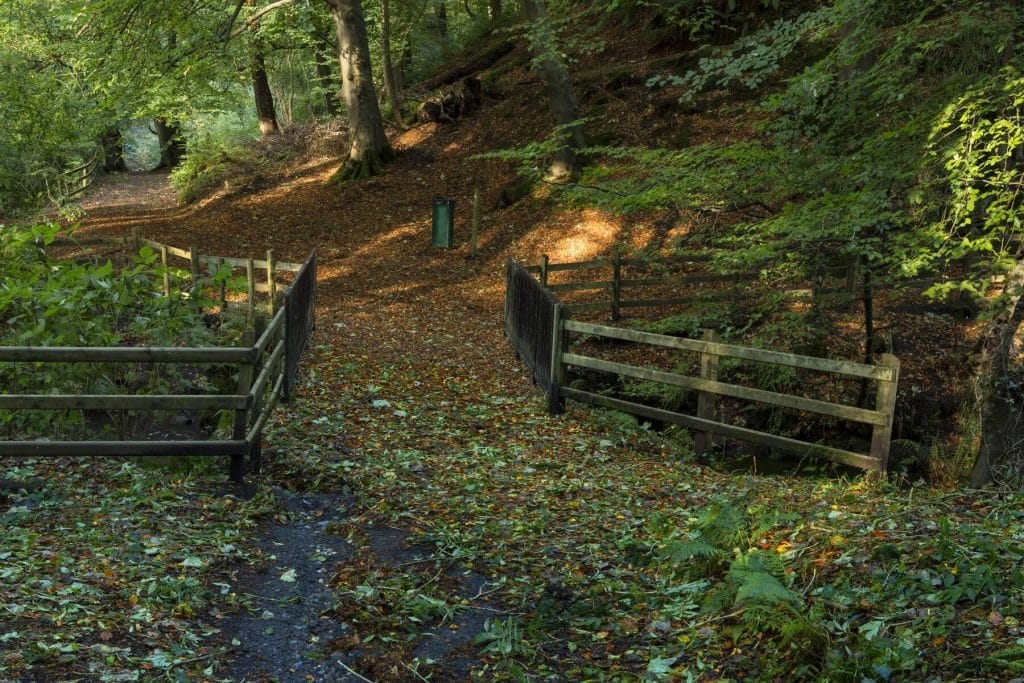 Crawfordsburn Country Park is one of the best forest parks in Northern Ireland.