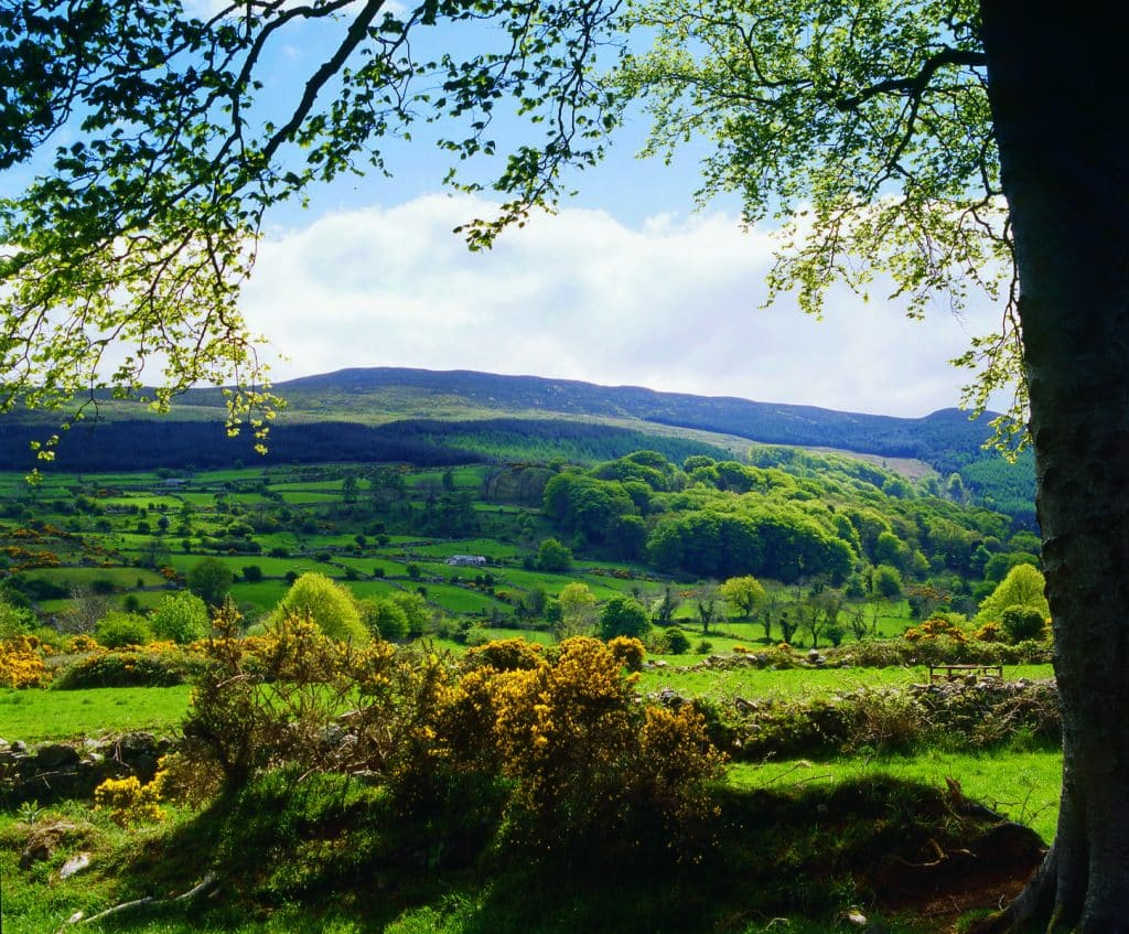 Slieve Gullion is one of the best forest parks in Northern Ireland.