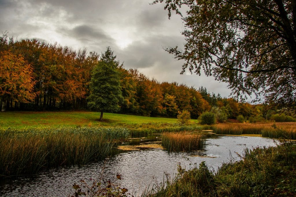Curragh Chase Forest Park is one of the best forest parks in Ireland.