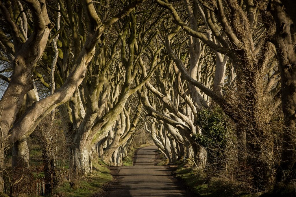 The Dark Hedges are well-known from Game of Thrones.