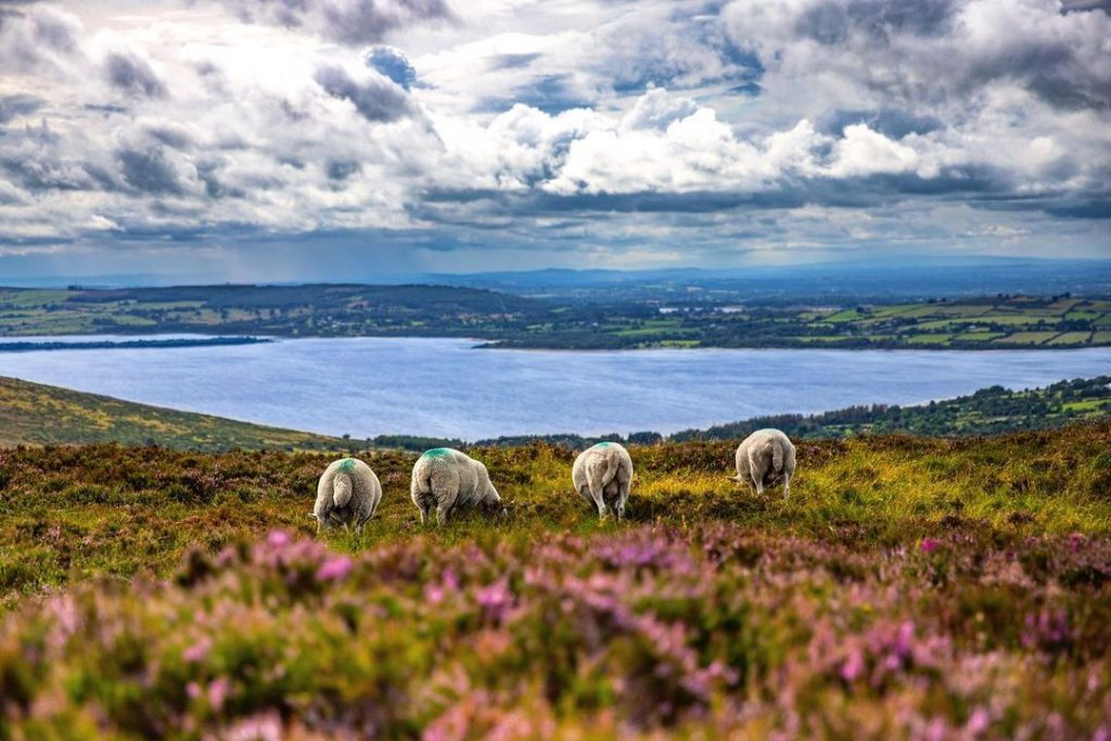 Blessington Lakes is one of the msot stunning P.S. I Love You film locations in Ireland.