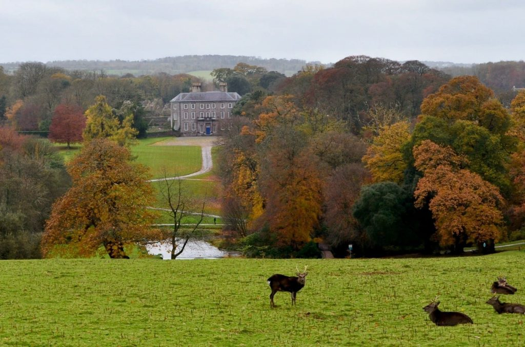 Doneraile Wildlife Park is one of the best wildlife parks in Ireland.