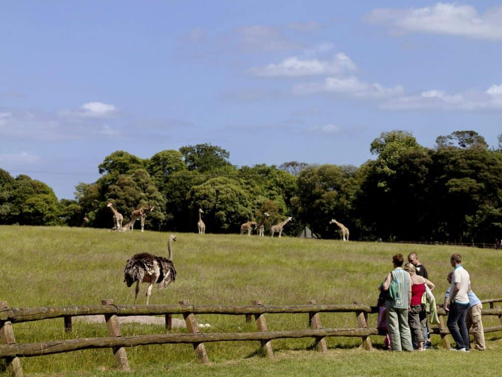 Fota tops our list of best wildlife parks in Ireland.