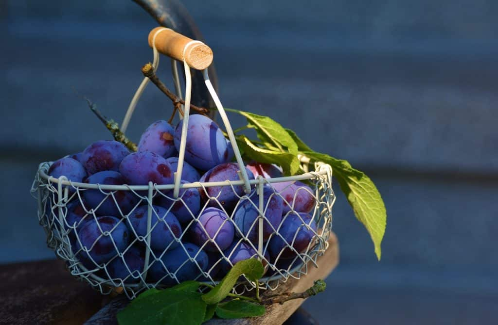 The 10 most popular fruits in Ireland