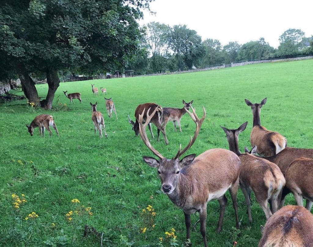 Stonehall Visitor Farm and Wildlife Park is the perfect day out with the kids.