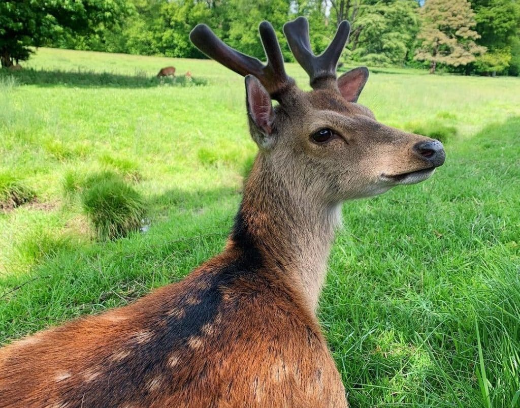 Doneraile Wildlife Park is one of the best wildlife and national parks in Ireland.