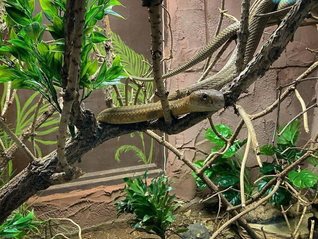The National Reptile Zoo is home to the largest snake in Ireland.