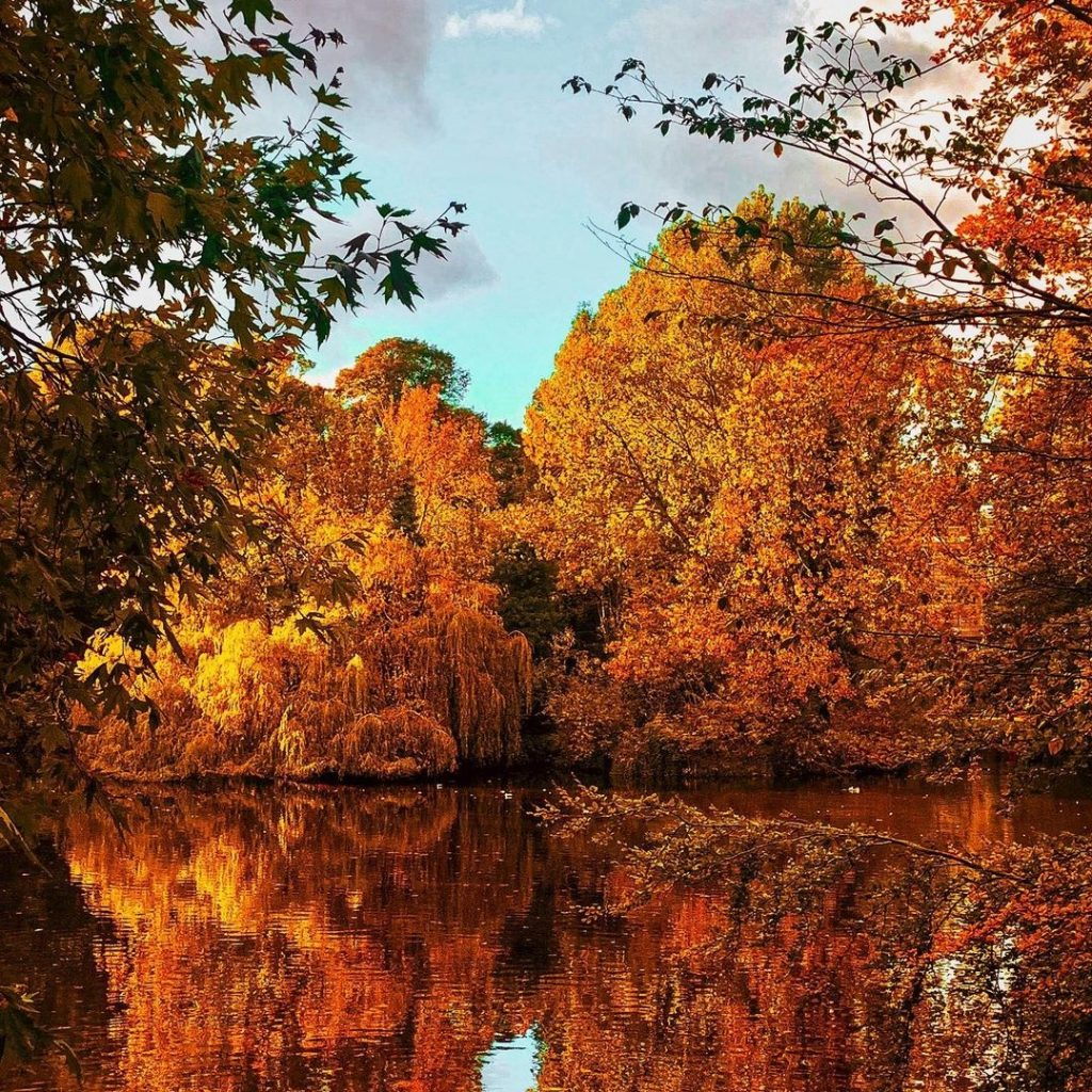 Pay a visit to Phoenix Park this fall.