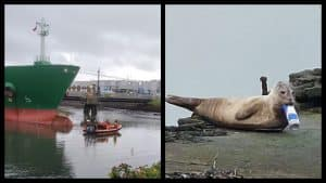 Belfast seal with Red Bull can lodged in its jaw evades rescue crews.