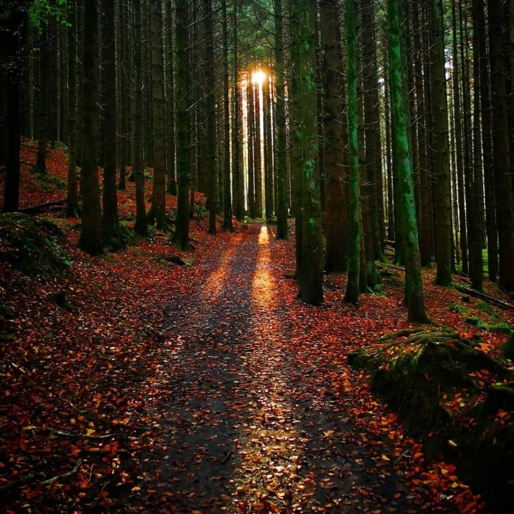 Slieve Bloom is one of the best places to visit in Ireland in the autumn.